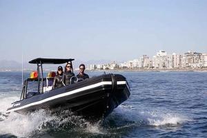Cape Town: Marine Big 5 Ocean Safari from V&A Waterfront