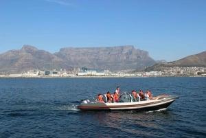 Cape Town: Marine Wildlife Cruise and City Tour