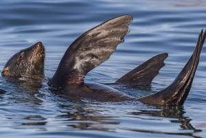 Cape Town: Marine Wildlife Tour from the V&A Waterfront