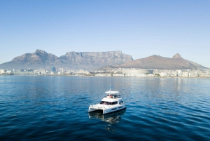Cape Town: Morning Cruise with Prosecco