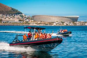 Cape Town Ocean Safari: Speed Boat Adventure in Table Bay