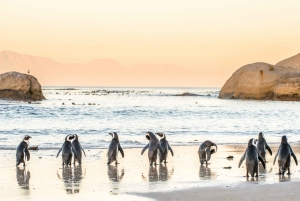 Cape Town: Penguin Watching at Boulders Beach Half Day Tour