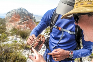 Cape Town Private Guided Table Mountain Hikes