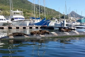 Cape Town: Seal Snorkeling at Duiker Island, Hout Bay