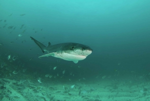Cape Town: Shark Cage Dive