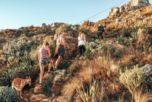 Cape Town: Table Mountain Hike via India Venster