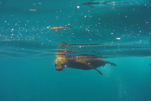 Cape Town V&A Waterfront Seal Snorkeling Experience