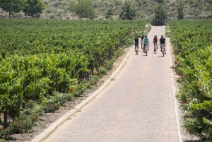 Cape Town: Winelands E-Bike Tour and Tasting Experience