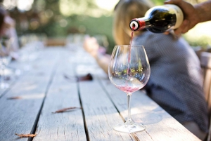 Capetown Winelands: Shared Half-Day Tour with Local Guide