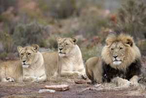 From Aquila Game Reserve 2-Day Safari Experience