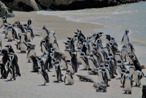 From Cape Point & Boulders Beach Full-Day Tour