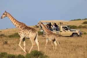 From Cape Town: 2-Day Glamping and Wildlife Safari
