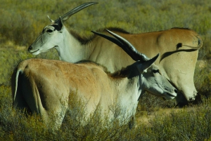 From Cape Town: Aquila Game Reserve 2-Day Safari Experience