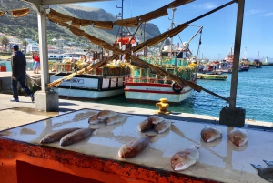 From Cape Town: Cape Point, Penguins And Wine Tasting Tour