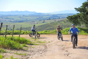 From Cape Town: E-Bike Winelands Tour