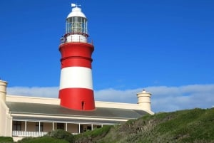 From Cape Town: Full-Day Cape Agulhas Private Tour