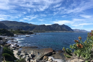 From Cape Town: Full Day Tour to Hermanus