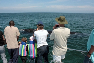 From Cape Town: Hermanus Whale Watching Boat Trip