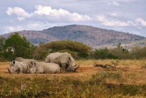 From Cape Town: Inverdoorn Game Reserve Full-Day Safari
