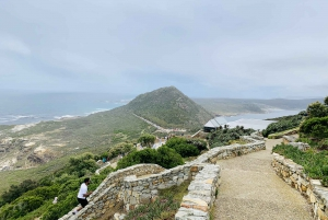From Cape Town: Private Cape Point and Peninsula Day Tour