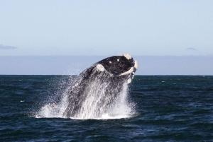 From Cape Town: Whale Watching Tour in Hermanus and Gansbaai