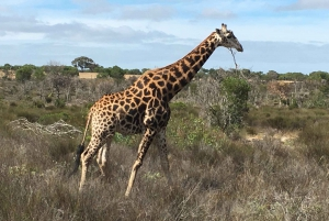 From Cape Town: Wildlife Safari, Olive, Beer & Wine Tasting