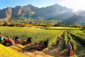 From Full-Day Winelands Tour with Tasting
