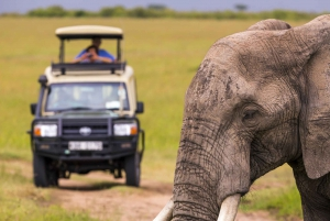 From Inverdoorn Game Reserve Full-Day Safari