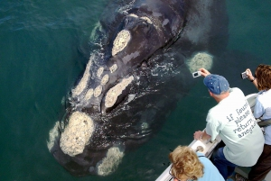 From Whale Watching Tour in Hermanus and Gansbaai