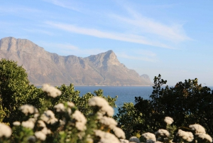 From Winelands and Whale Coast 2-Day Tour
