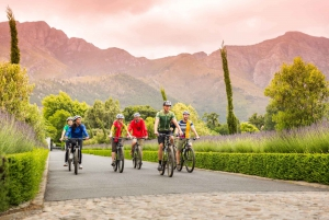 From Winelands Cycling Tour