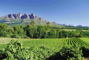 From Winelands Full Day Tour and Wine Tasting