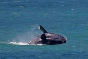 Full Day Trip to Hermanus from Cape Town