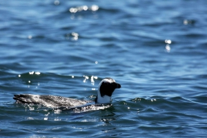 Gansbaai and Big 5 Sea Safari Full-Day Tour from Cape Town