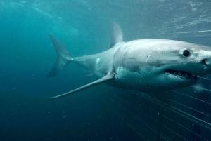 Gansbaai Eco-Friendly Shark Cage Diving