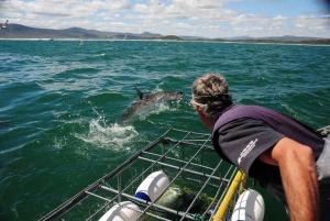 Gansbaai: Shark Cage Diving
