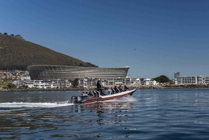 Guided Marine Wildlife Cruise and Cape Point Tour