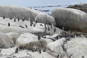Half Day Trip to Boulders Beach Penguin Colony