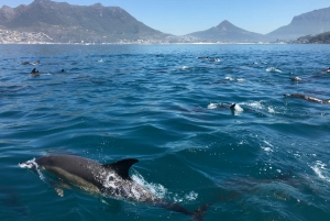 Hout Bay: Seal Island and Marine Life Guided Boat Tour