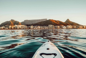 Marine Life Kayak Tour From The V&A Waterfront