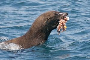 Marine Wildlife Cruise and City Tour