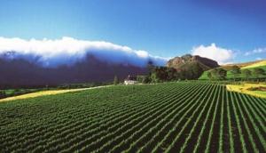 Mont Rochelle Mountain Vineyards