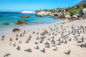 Penguin Watching at Boulders Beach Half Day Tour