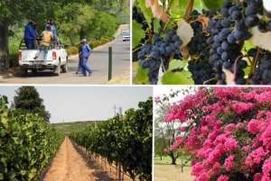 Private Full-Day Wine Tour and Tasting from Cape Town