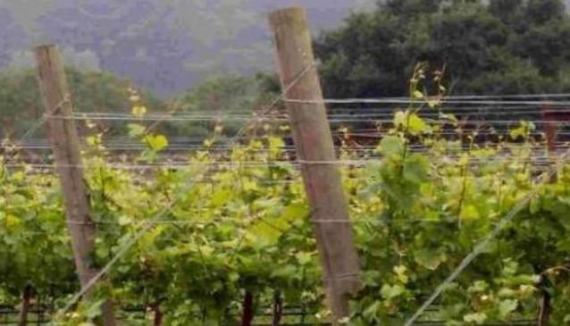 R62 Wine Tours