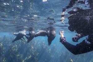 Seal Snorkeling at Duiker Island, Hout Bay