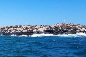 Simon's Town: Seal Island Boat Tour