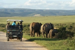 South African Wildlife and Safari 2-Day Tour from Cape Town