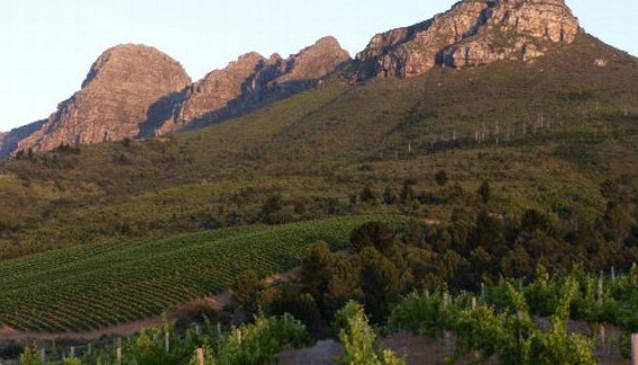Spier Wine Estate