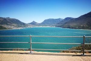 Stellenbosch: Private Magical Cape Peninsula Tour